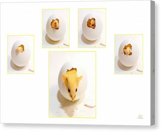 Barn Mouse Canvas Print