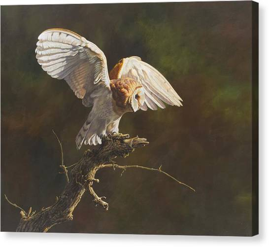 Canvas Print featuring the painting Barn Owl by Alan M Hunt