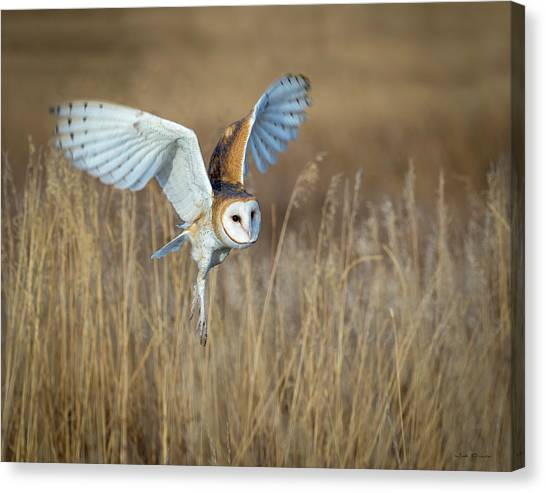 Barn Owl In Grass Canvas Print