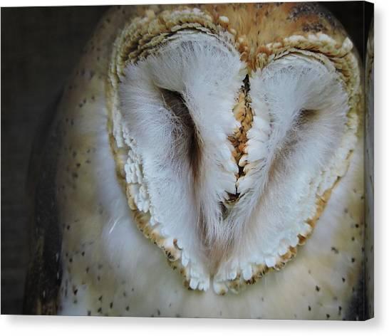 John Adams Canvas Print - Barn Owl by John Adams