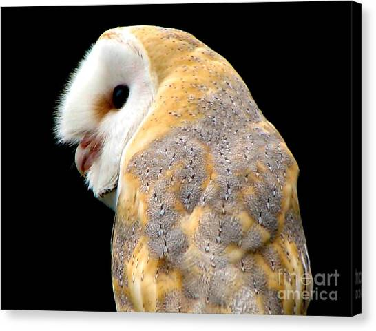 Canvas Print featuring the photograph Barn Owl by Rose Santuci-Sofranko