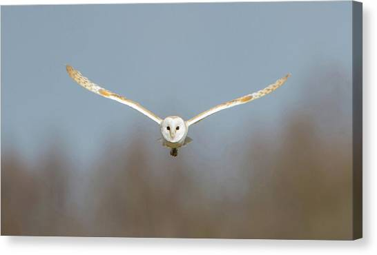Barn Owl Sculthorpe Moor Canvas Print