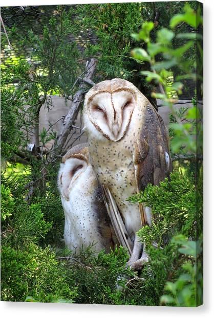 Barn Owls Canvas Print by George Jones