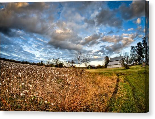 Barns And Cotton Canvas Print