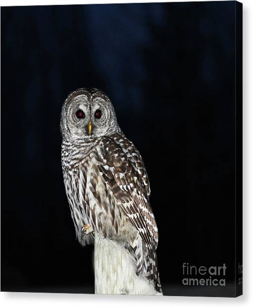 Canvas Print - Barred Owl by Gary Wing