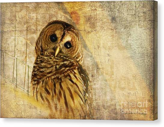 Brown Canvas Print - Barred Owl by Lois Bryan
