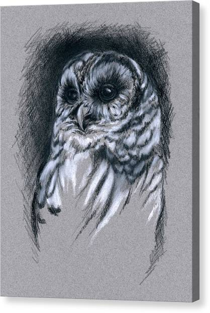 Canvas Print featuring the drawing Barred Owl by MM Anderson