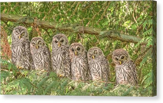 Barred Owlets Nursery Canvas Print