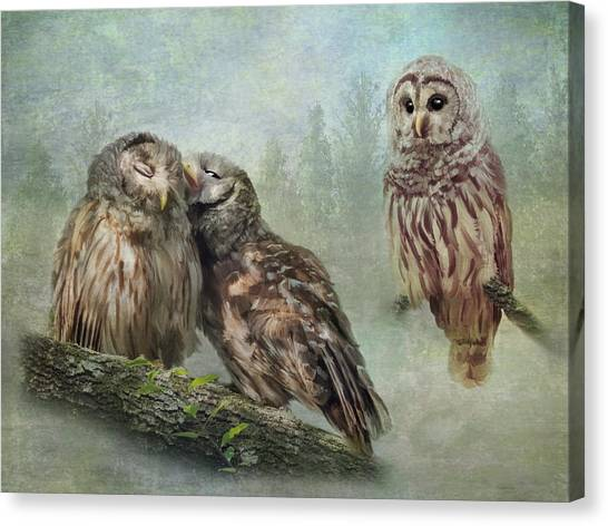 Barred Owls - Steal A Kiss Canvas Print