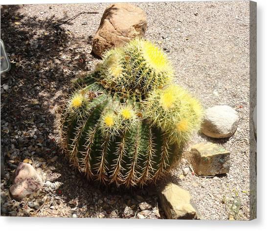 Barrel Of Cactus Needles Canvas Print
