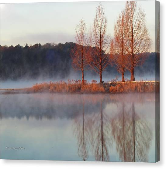 Barren, Beautiful Trees Canvas Print