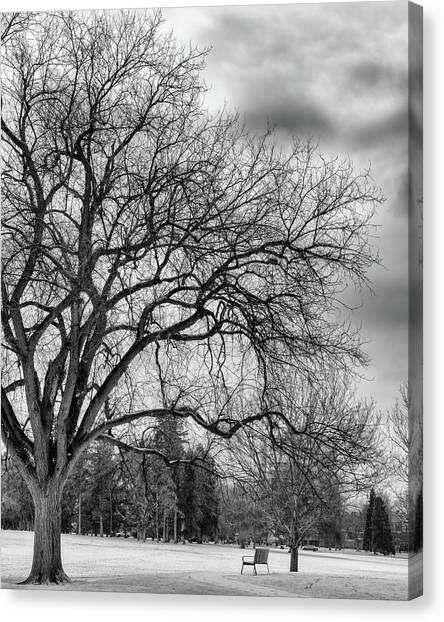 Winter In Cheesman Park, Denver, Co Empty Trees And Empty Benches Canvas Print