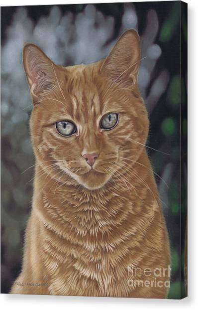 Barry The Cat Canvas Print