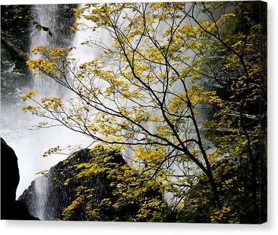 Base Of The Falls. Canvas Print