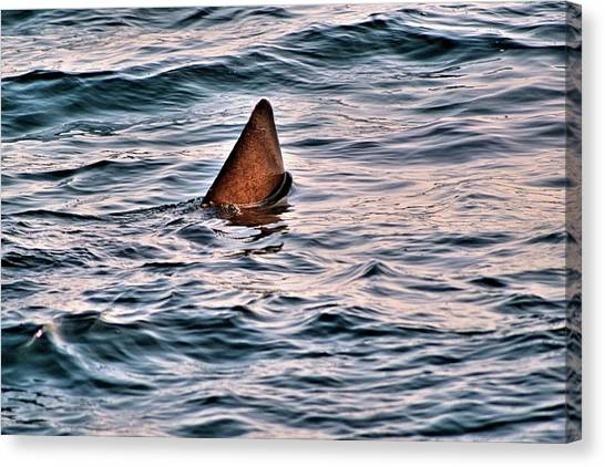 Basking Shark In July Canvas Print