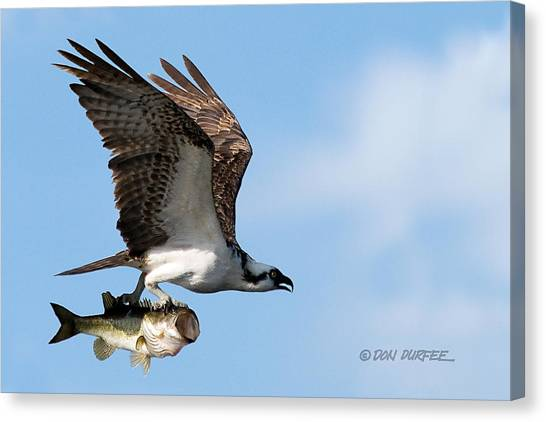 Canvas Print - Bass Master 4 by Don Durfee