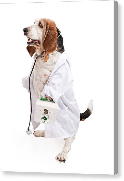 Health Care Canvas Print - Basset Hound Dog Dressed As A Veterinarian by Susan Schmitz