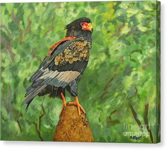 Bataleur Eagle Canvas Print - Bataleur Eagle by Caroline Street