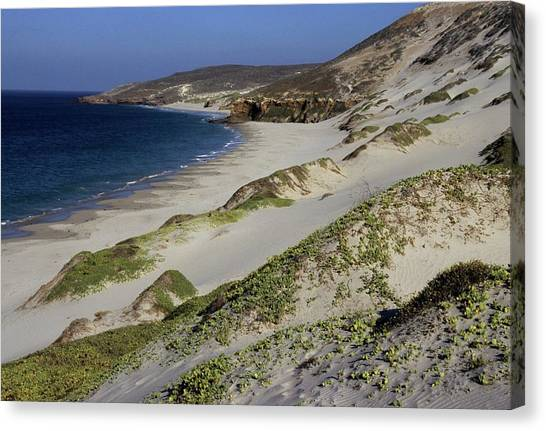 Bay Beach And Sand Dunes Canvas Print