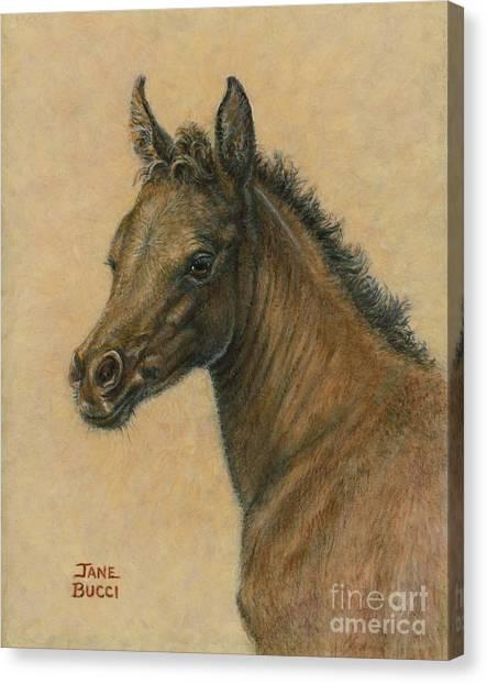 Bay Colt Canvas Print