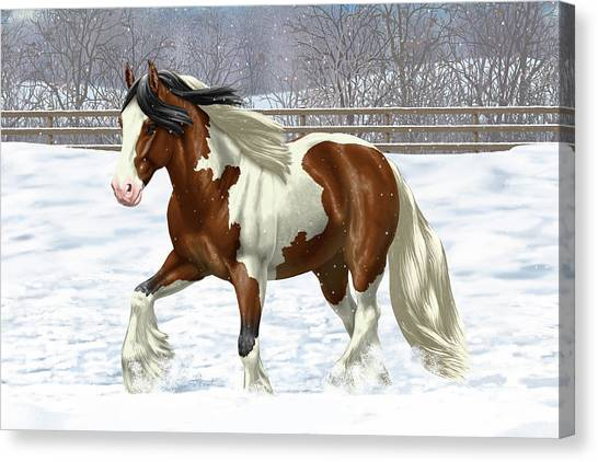 Draft Horses Canvas Print - Bay Pinto Gypsy Vanner In Snow by Crista Forest