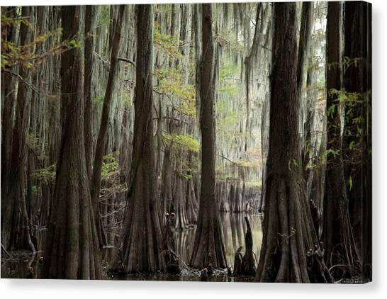 Bayou Trees Canvas Print