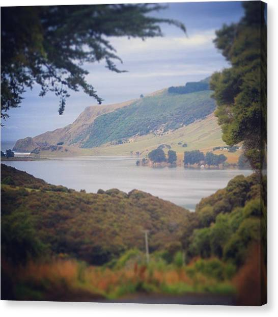 Kiwis Canvas Print - Be #grateful When Being Offered A by Rune Kristian B