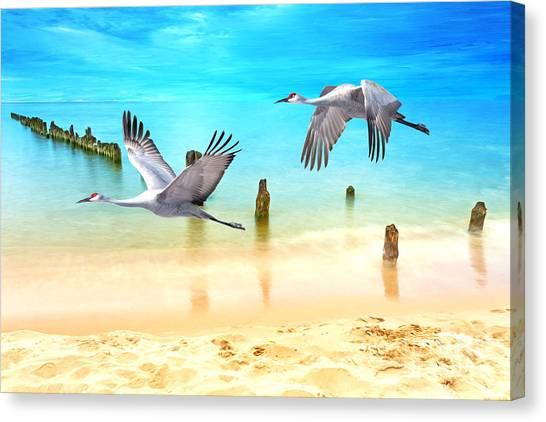 Sandhill Crane Canvas Print - Beach Beauties by Laura D Young
