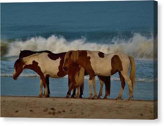 Beach Bum Ponies Canvas Print
