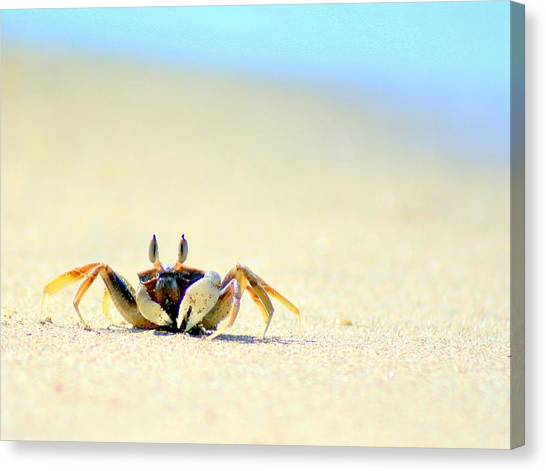 Crabs Canvas Print - Beach Crab by A Rey