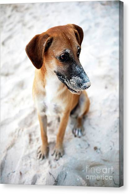 Beach Dog Canvas Print by John Rizzuto