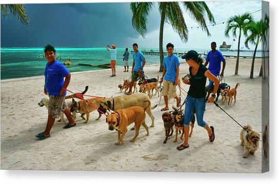 Beach Dog Walkers On Ambergris Caye, Belize Canvas Print