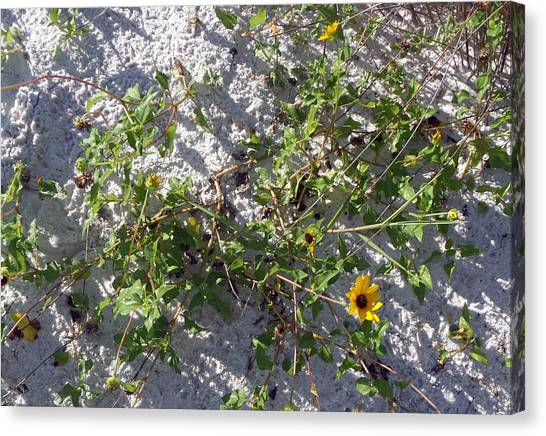Beach Flora Canvas Print by Pepsi Freund