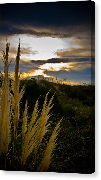 Beach Grass Canvas Print by Patrick  Flynn