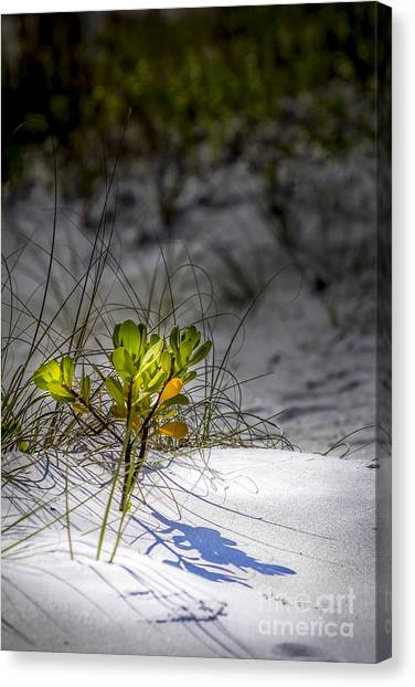 Mangrove Trees Canvas Print - Beach Life by Marvin Spates