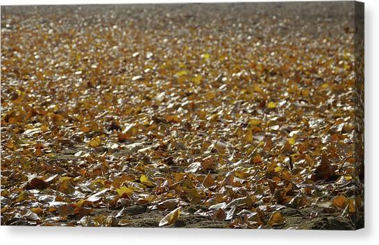 Beach Of Autumn Leaves Canvas Print