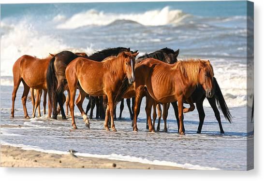 Beach Ponies Canvas Print