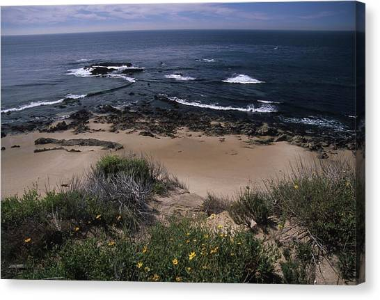 Beach Reef Point Wildflowers Canvas Print