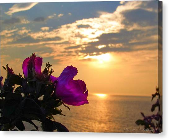 Beach Roses Canvas Print