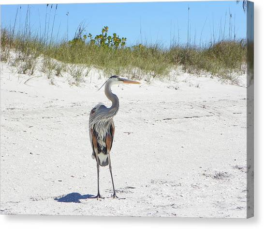 Saltwater Life Canvas Print - Beach Royalty by Sheri McLeroy