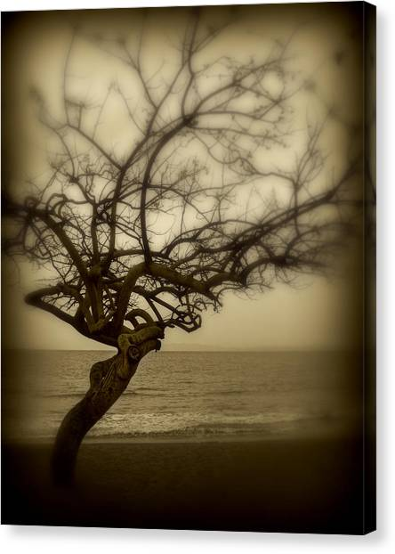 Beach Tree Canvas Print