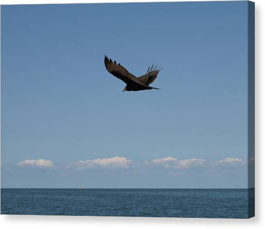 Beach Vulture Canvas Print