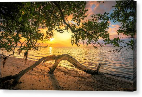 Mangrove Trees Canvas Print - Beach Wood by Marvin Spates