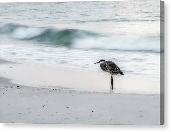 Beachbird Canvas Print