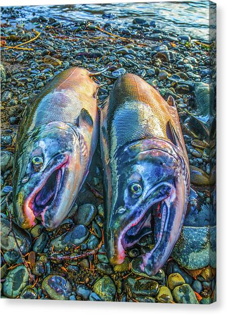 Beached Coho Canvas Print