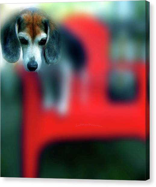 Beagle Beba Portrait Canvas Print