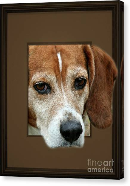 Beagle Peeking Out Canvas Print