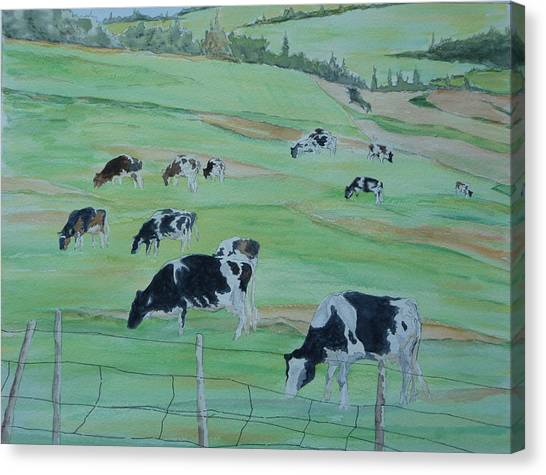 Beanie's Cows Canvas Print