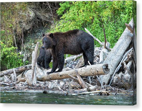 In The Great Bear Rainforest Canvas Print