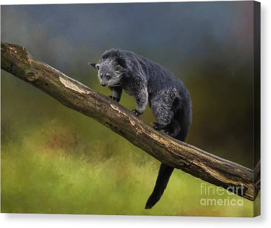 Bearcat Canvas Print